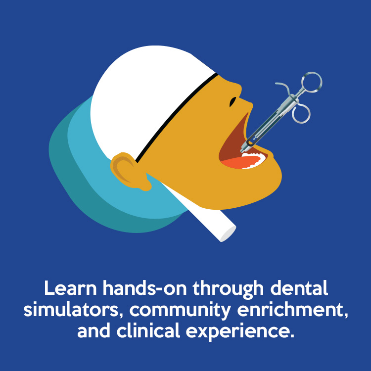 Learn hands-on through dental simulators, community enrichment, and clinical experience.